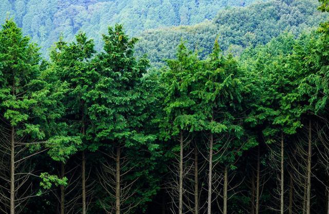 Página web para Gefrecon Gestión Forestal Conjunta